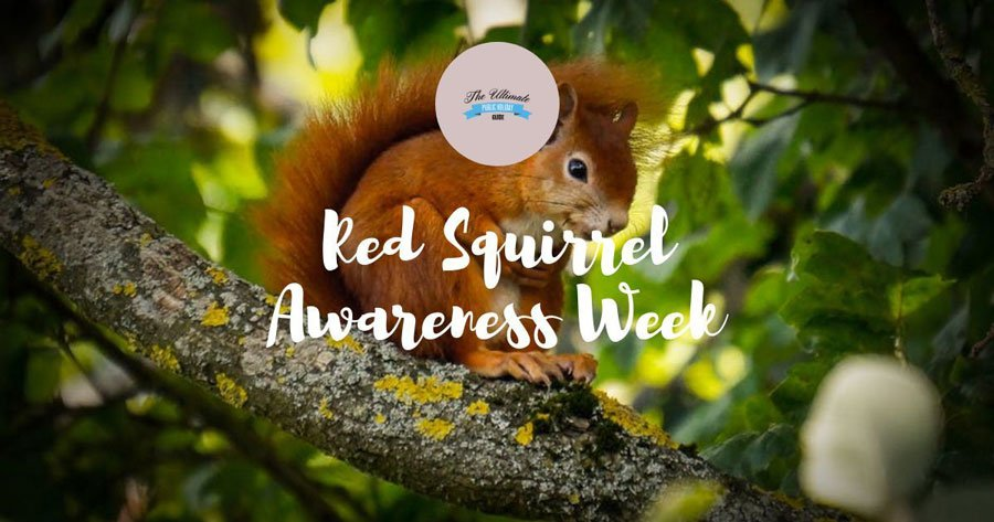 Red Squirrel Awareness Week